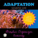 Adaptation Marine Life- Graphic Organizer Activity