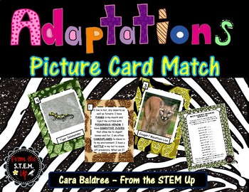 Adaptation Picture Card  Sort