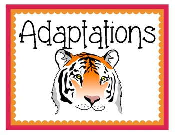 Adaptation Vocabulary Cards