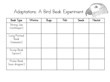 Adaptations: Bird Beak Experiments (structures and functions)