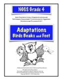 Adaptations: Bird Beaks and Feet