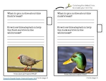 Adaptations: Birds and their Beaks Mini Flipbook