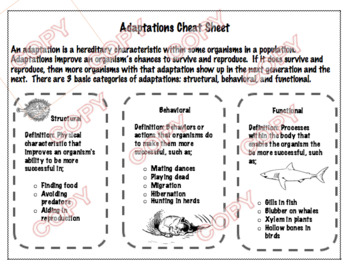 Adaptations Study Sheet