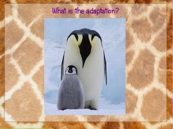 Adaptations Flipchart 5th Grade