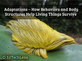 Adaptations - How Behaviors and Body Structures Help Living Things Survive PDF