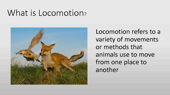 Adaptations: Locomotion PDF eBook