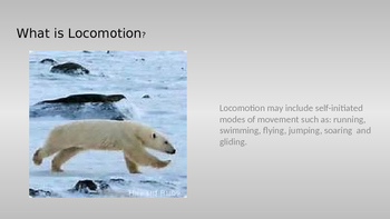 Adaptations: Locomotion Powerpoint