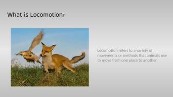 Adaptations: Locomotion Powerpoint
