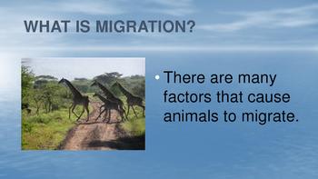 Adaptations: Migrations eBook PDF