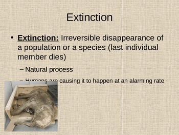 Adaptations Power Point