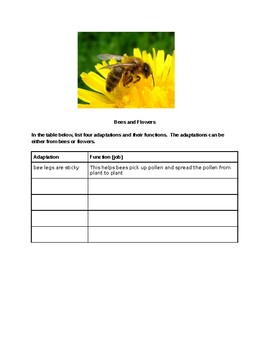 Adaptations RAFT Writing Assignment:  Bees and Flowers