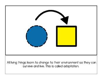 Adaptations Story and Worksheets