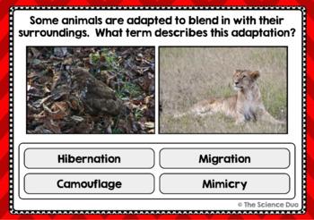 Adaptations Task Cards - Digital Boom Cards™