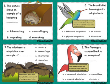 Adaptations Task Cards: Science Scoot 'Ems