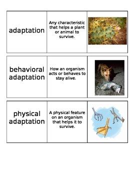 Adaptations Unit Vocabulary Cards