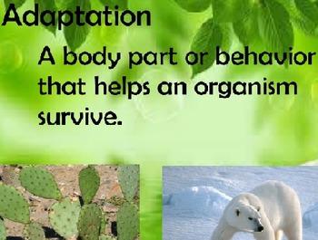 Adaptations Vocabulary