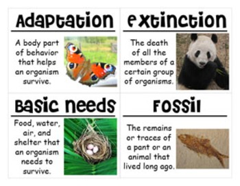 Adaptations Vocabulary Cards