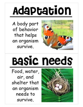 Adaptations Vocabulary Cards (Large)