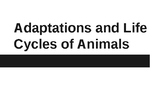 Adaptations and Animal Life Cycles