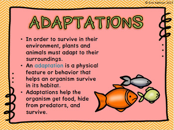 Adaptations and Extinction PowerPoint and Notes Set