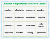Adaptations and Food Chains Review
