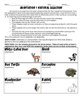 adaptations and natural selection hw worksheet by scienceisfun tpt. Black Bedroom Furniture Sets. Home Design Ideas