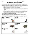 Adaptations and Natural Selection HW/Worksheet