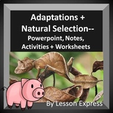 Adaptations and Natural Selection -- PowerPoint, Notes, Ac