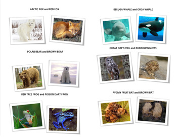 Adaptations in Animals (Diversity of Life Activity 8)