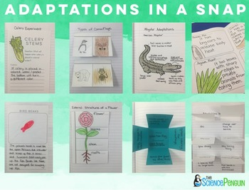 Adaptations in a Snap