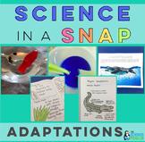2nd and 3rd Grade Adaptations Unit