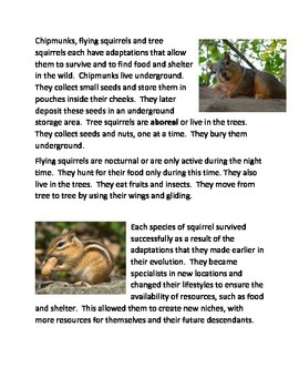 Adaptations in squirrels