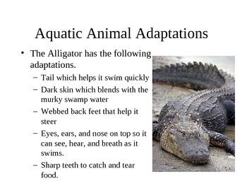 Adaptations of Living Things