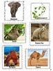 Adaptations of Plants and Animals