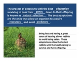 Adaptations of Predators and Prey PowerPoint Lesson