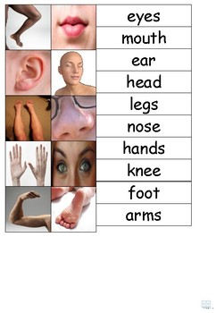 Adapted Book - Body Parts