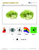 Adapted Book : Counting 1-10 & Speech Development:Vegetable Theme