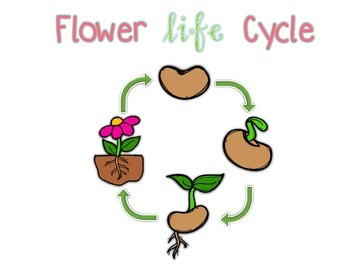 Adapted Book for Early Childhood and Autism Students: Flower Life Cycle