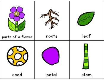 Adapted Book for Early Childhood and Autism Students:Parts of a Flower