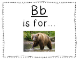 Adapted Letter B Book