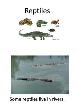 Adapted Reptile Book