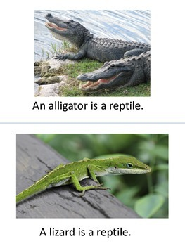 Adapted Reptile Book with repeated lines