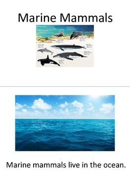 Adapted Sea / Marine Mammals Book