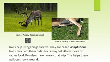 Adapted Traits of Plants & Animals - Science Informational Text Audio Version