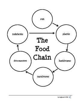 Adapted Work Packet: The Food Chain