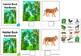 Habitat Rainforest ADAPTED BOOK (level 1, level 2 and level 3) & activities