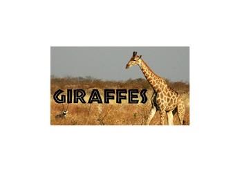 All About Giraffes - Adapted text  & Questions
