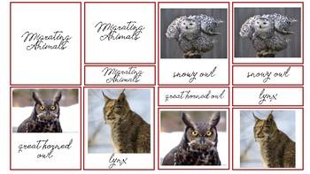 Adapting Animals 3 Part Cards