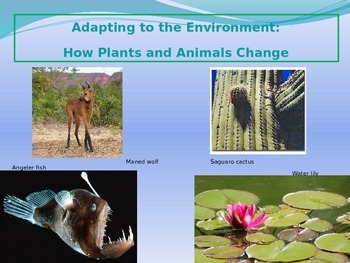 Adapting to the Environment: How Plants and Animals Change
