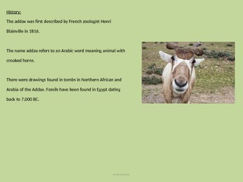 Addax - Endangered Animal Power Point - Facts History Pictures